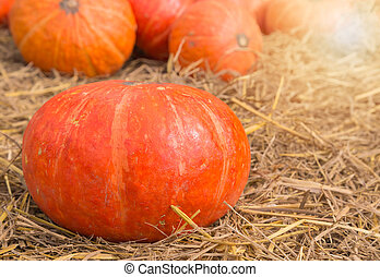 pumpkin on ground with dry straw