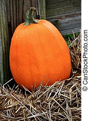 Pumpkin on hay - closeup