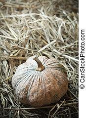 pumpkin on straw closeup