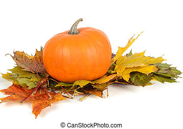 Pumpkin on the maple leaves over white background