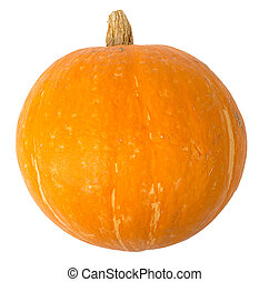 Pumpkin on white, front view