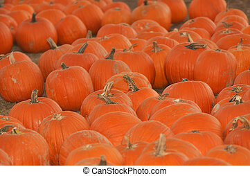 Pumpkin Patch - 6