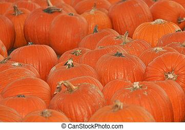Pumpkin Patch - 7