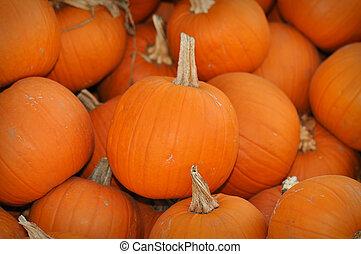 Pumpkin Patch - 8