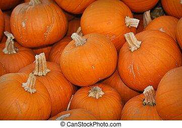 Pumpkin Patch - 9