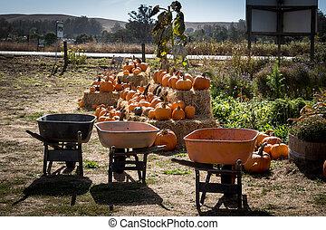 Pumpkin Patch and Wheelbarrows