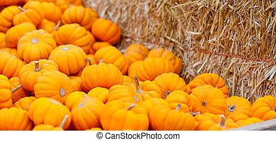 pumpkin patch - close-up of small orange pumpkins at fall...