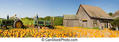Pumpkin Patch Farm House with Halloween Decoration - Pumpkin...