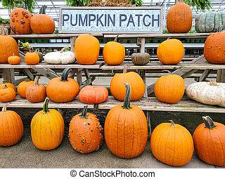 pumpkin patch in greenhouse