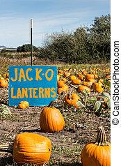 Pumpkin Patch, Jack o' Lantern