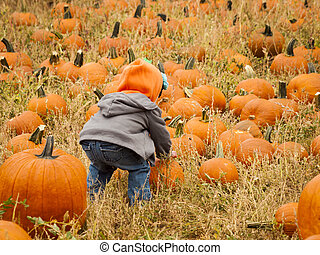 Little kid picking pumpkind at the pumpkin patch in aearly Autumn.