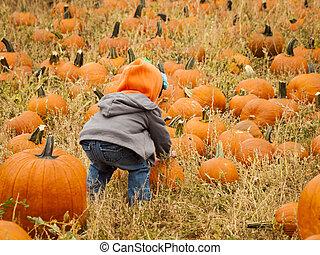 Pumpkin patch - Little kid picking pumpkind at the pumpkin...