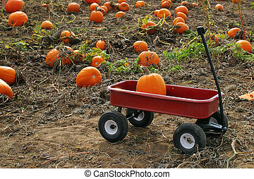 Pumpkin sitting in wagon at a pumpkin patch