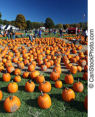 Pumpkin patch - Traditional American pumpkin patch farm in...