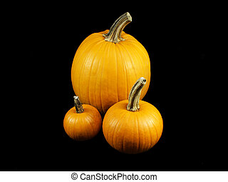 Pumpkin pile 2
