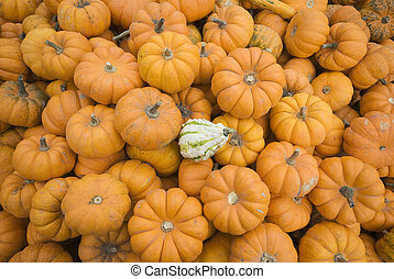 pumpkin pile with one odd one