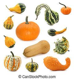 pumpkin, samling
