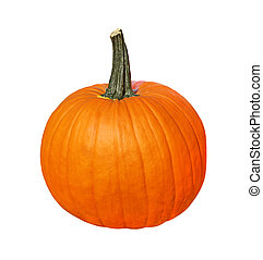 Pumpkin - Single fresh pumpkin isolated on white background