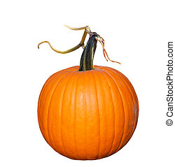 Pumpkin - Fresh pumpkin with vine isolated on white...