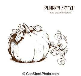 Pumpkin vector drawing set.