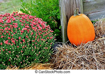 Pumpkin with a Chrysanthemum
