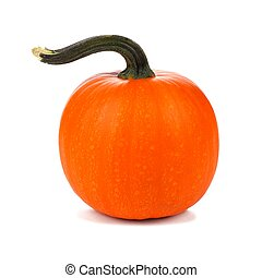 Pumpkin with curled stem isolated on white - Single pumpkin...