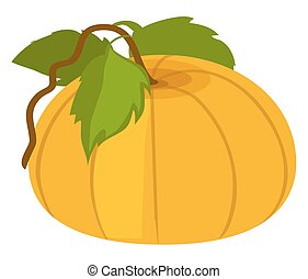Pumpkin with Green Leaves Vector Illustration