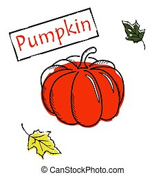 Pumpkin with leaf icon vector illustration on white background