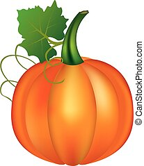Pumpkin with leaf on white background