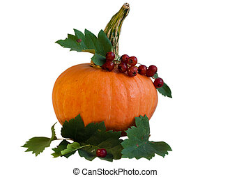 Pumpkin with Viburnum isolated on white