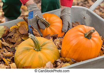 pumpking, brouette