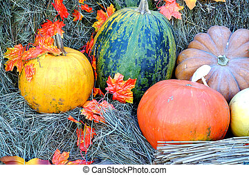Pumpkins and autumn leaves laying on dry hay