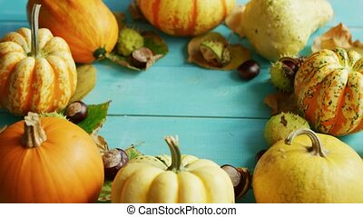 Pumpkins and chestnuts laid in circle - From above view of...