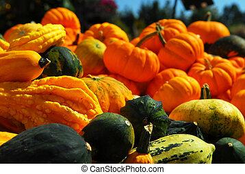 Pumpkins and gourds - Ornamental pumpkins on farmers market ...