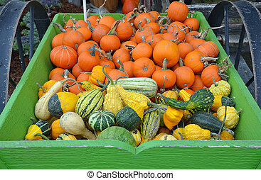 Pumpkins and gourds - Pumpkins and colorful gourds in green ...