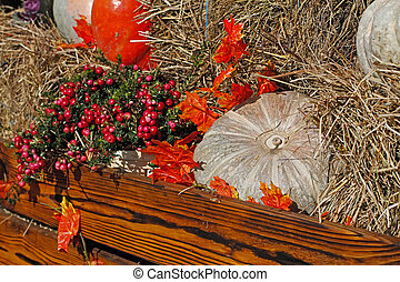 Pumpkins and pink berries of pernettya as autumn decoration at market place