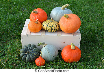 Pumpkins and squashes harvest