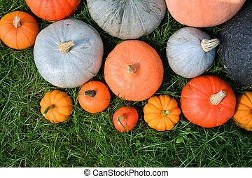 Pumpkins and squashes varieties