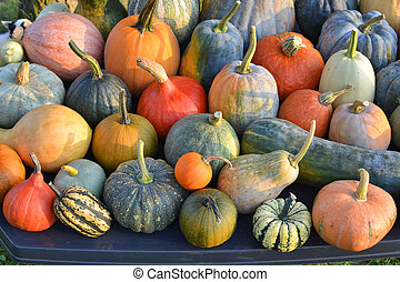 Pumpkins and winter squashes varieties
