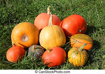 Pumpkins and winter squashes