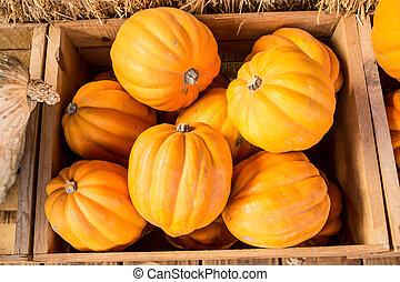 Pumpkins at a Farm