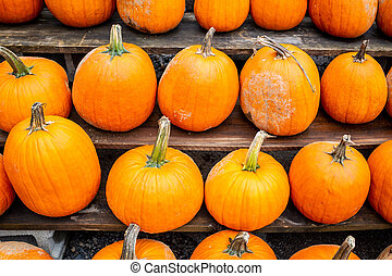 Pumpkins at country farmers market for holidays