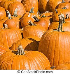 Pumpkins at market.