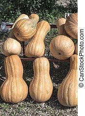 Pumpkins at market