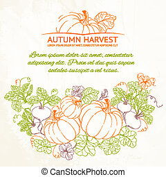 Pumpkins, Autumn harvest. Vector illustration.