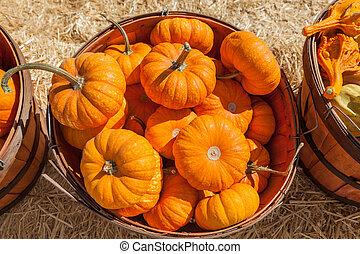 Basket full of pumpkins for sale at pumkin patch.