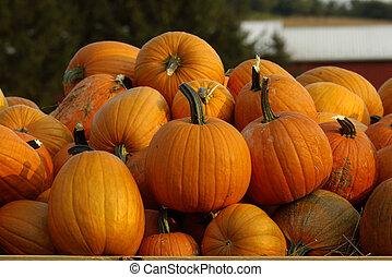 Pumpkins - Collection of pumpkins at local farmers market