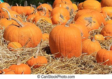 Pumpkins (Cucurbita moschata) Drying