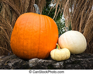Pumpkins decorating a garden