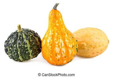 pumpkins decorative colorful various gourds ornamental